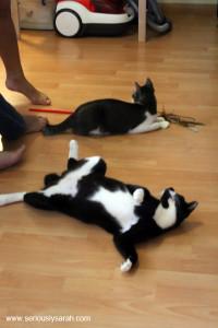 Relaxing cats!